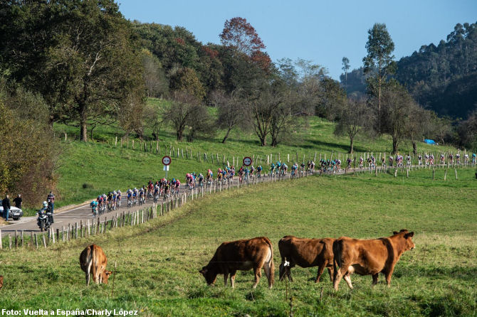 Pelotón de la Vuelta a España
